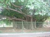 cuba2007-98